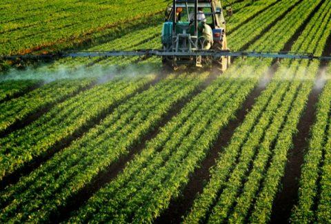 pesticide_ilfede-istockphoto-800-768x472